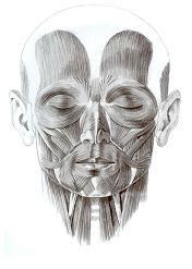 anatomia_de_la_nariz