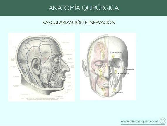 anatomia_quirurgica1