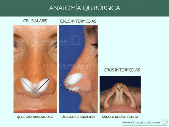 anatomia_quirurgica10