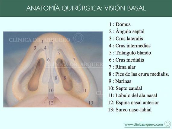 anatomia_quirurgica11